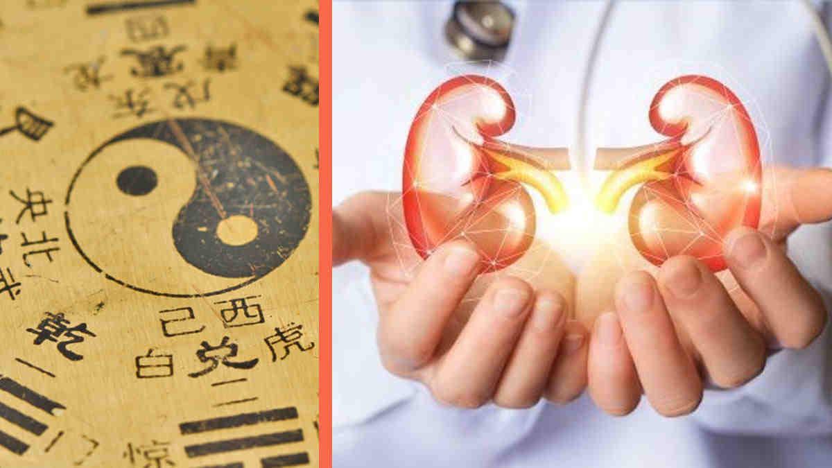 Equilibre du corps: le «yin et yang» des reins